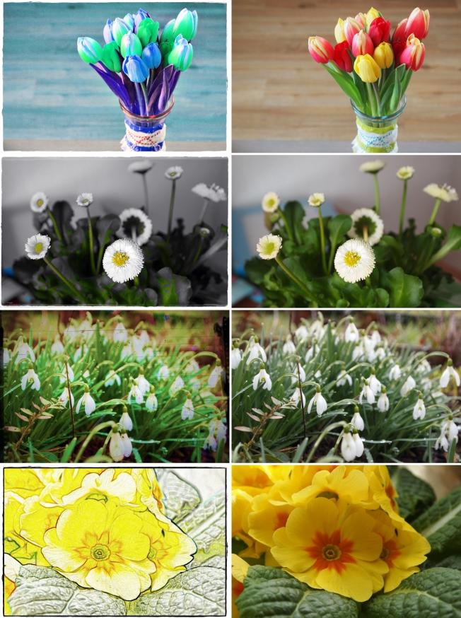 PEP-Blütenpracht hoch 4