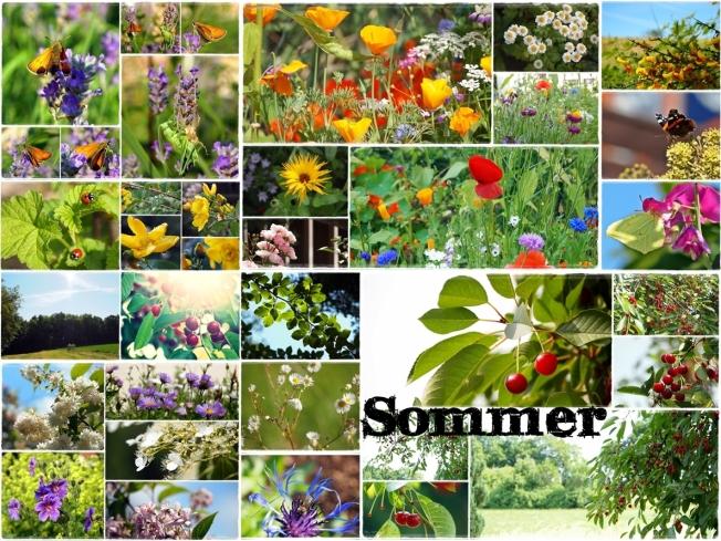 3 - Sommer