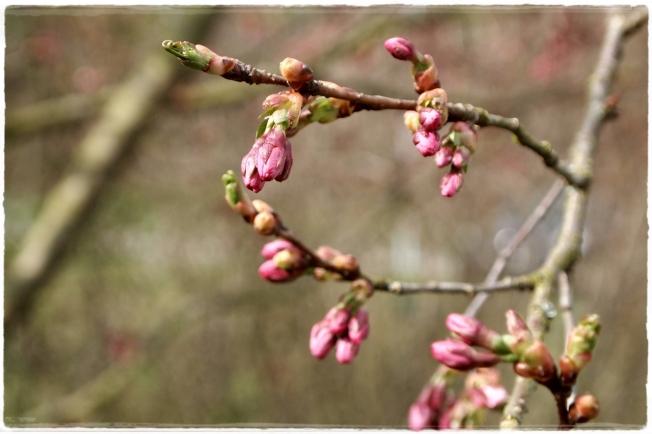 Frühlingshelden...