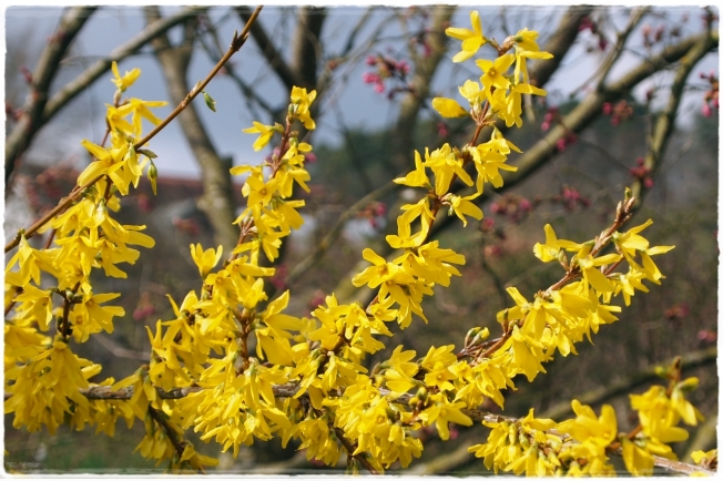 Frühlingshelden