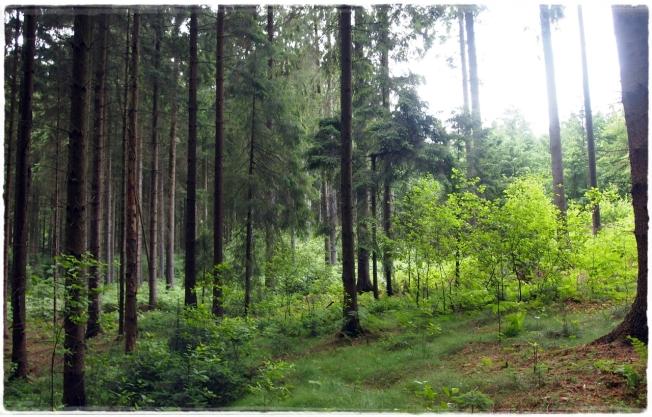 Deepinsidetheforest