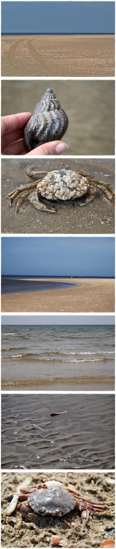 Strandliebe