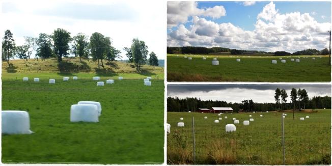 Marshmellowfelder