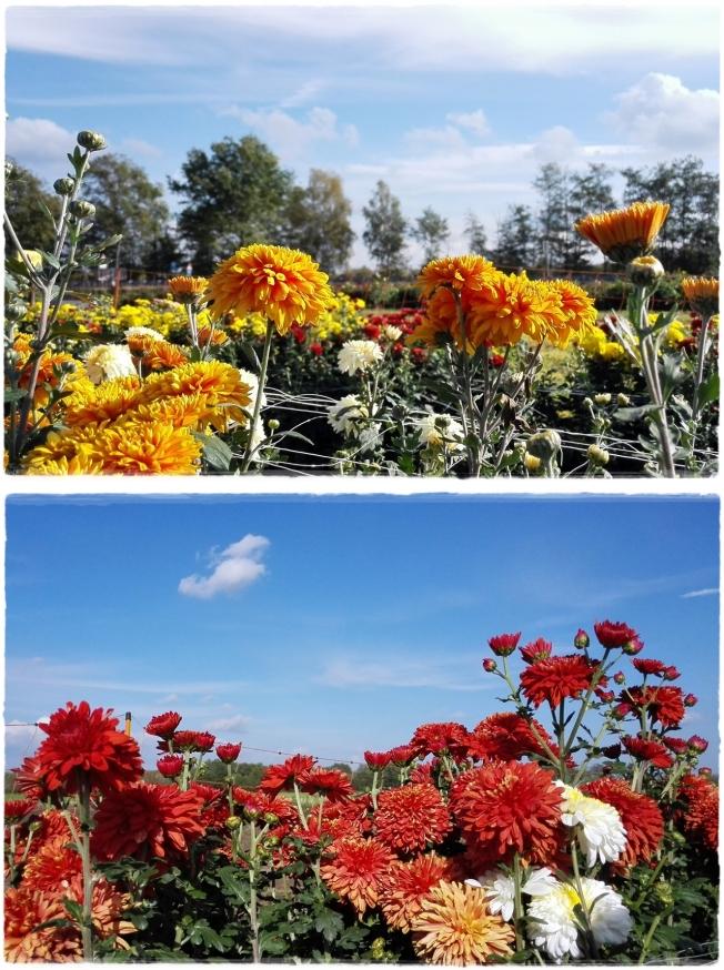 Blumenliebe..