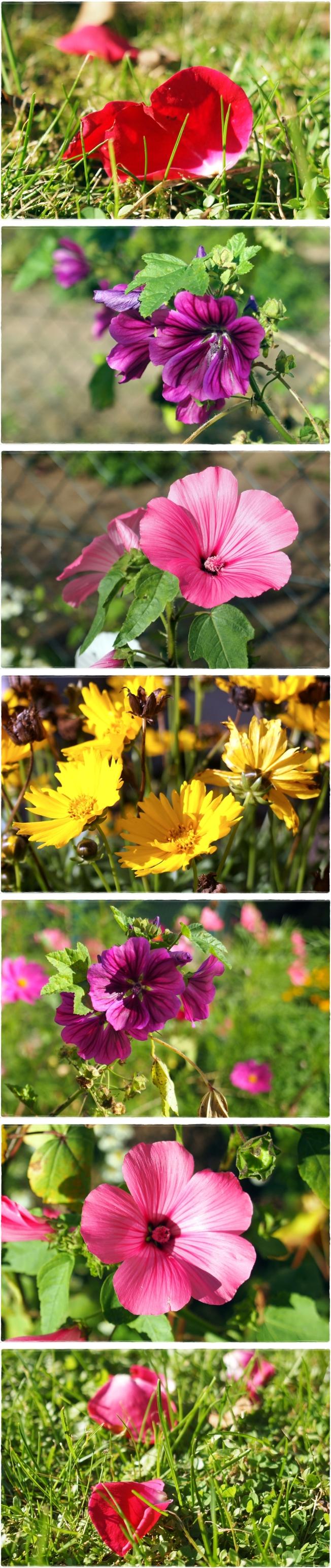 Flowerspam