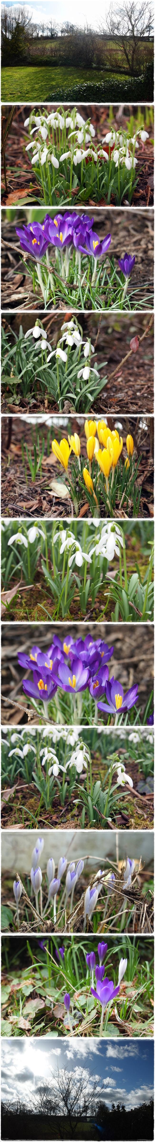 Frühlingshaftes