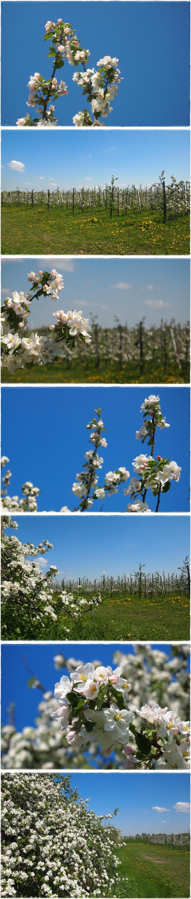 Blütenliebe..