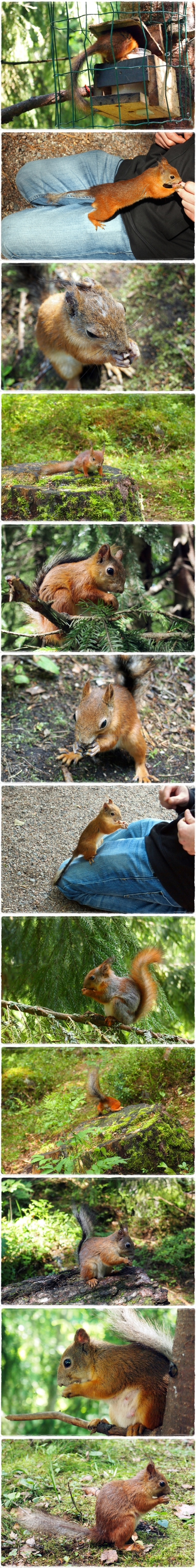 Eichhörnchenspam