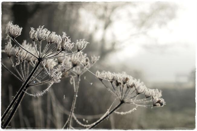 frostliebe