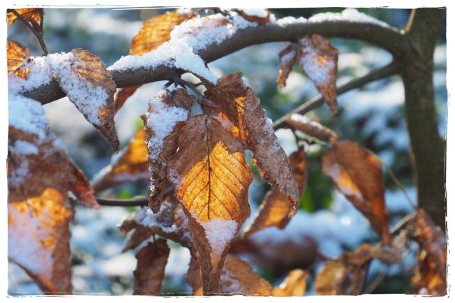 Winterliebe