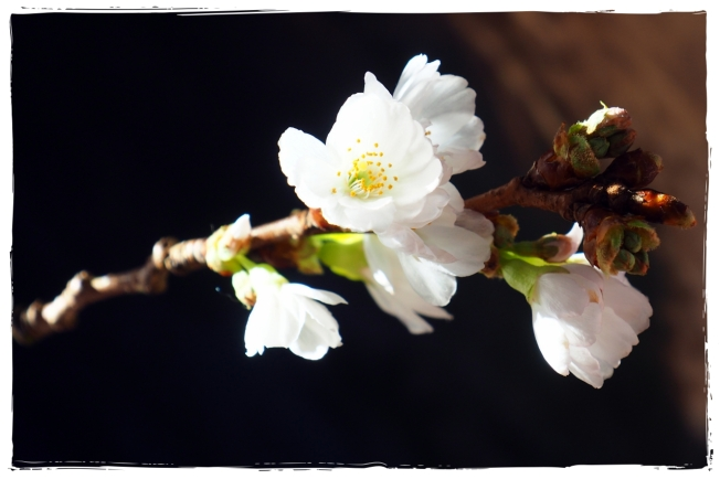 Blütenliebe