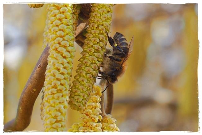 Bienenliebe01