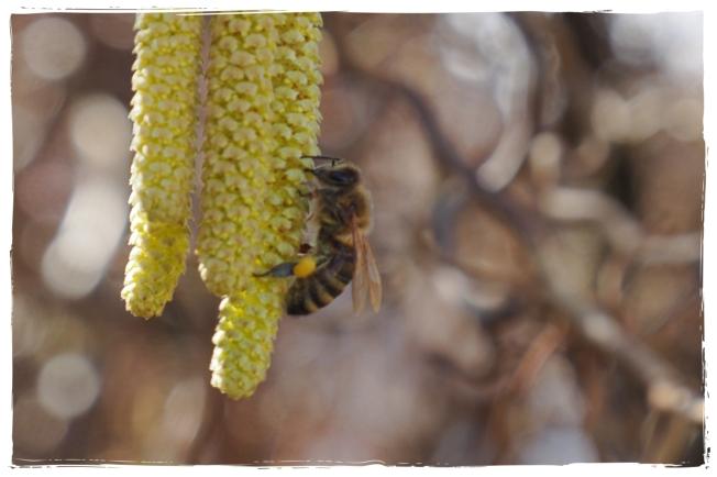 Bienenliebe03