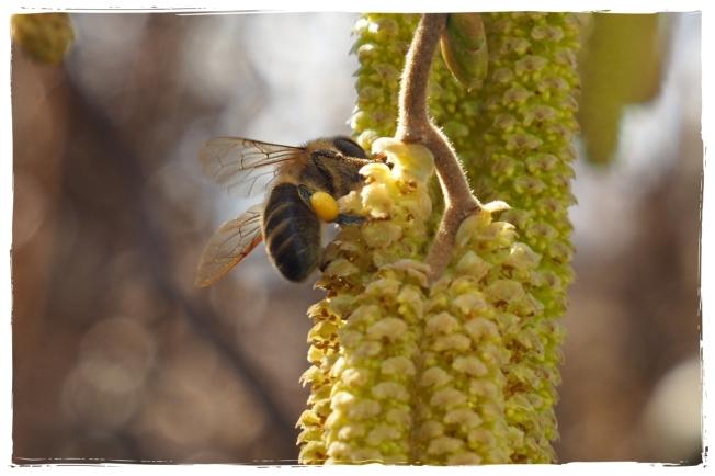 Bienenliebe05