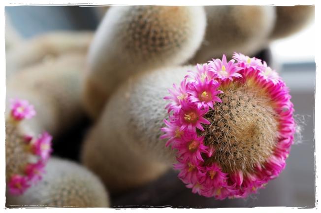 Blühendes