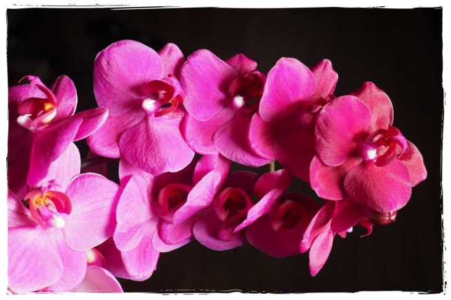 Orchideenliebe